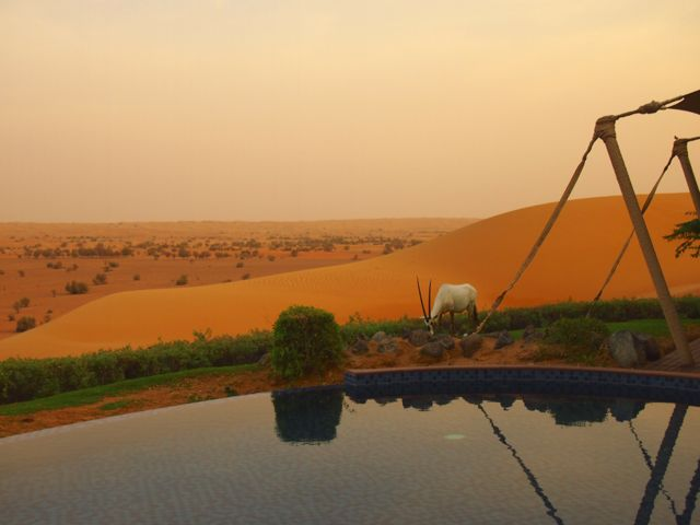 Al Maha Desert Resort in Dubai