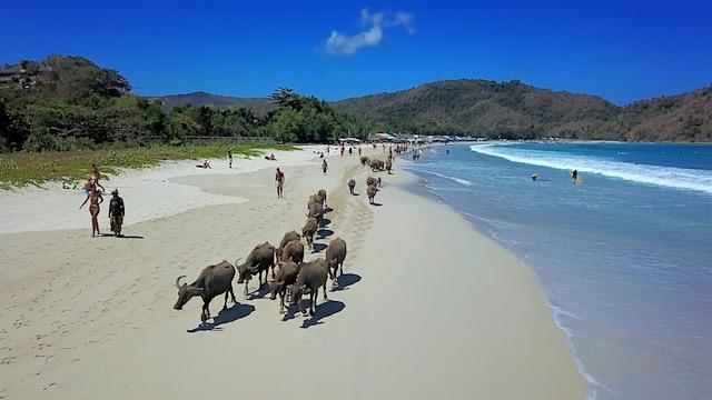 Lombok Selong Belanak Beach Bueffel