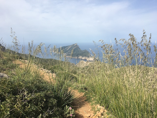 Mallorca Dracheninsel