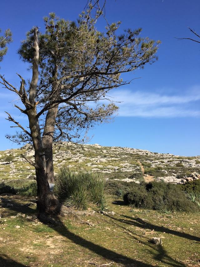 Mallorca zwischen Valldemossa und Deia